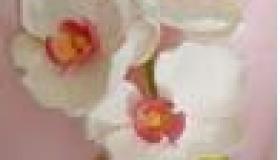 b43white_pink.jpg
