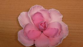 pink_bazsa.jpg