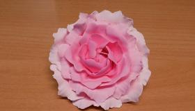 pink_p__nk__sdi.jpg