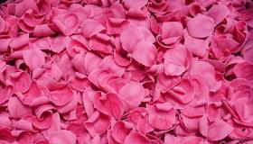pink_csoki_szirom.jpg