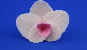 feh__r_orchidea.jpg