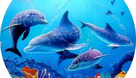 delfinek.jpg