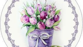 lila_tulip__nok.jpg